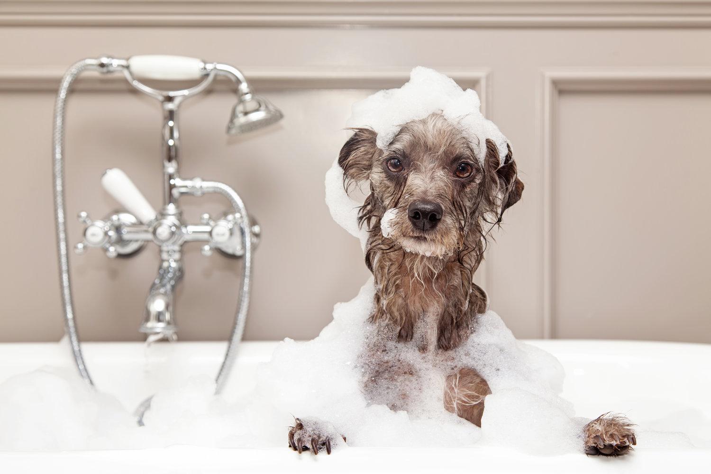 Dog+Bath