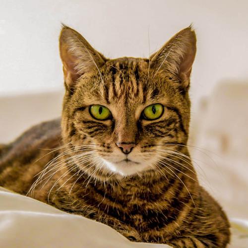 home_animalshelter_portfolio1